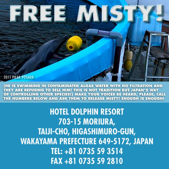 Save Misty