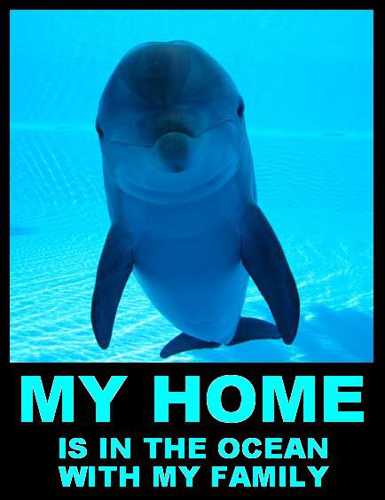 Dolphin Captivity is unethical