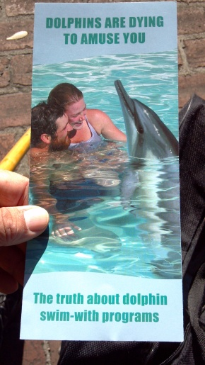 Dolphins Dying to Entertain