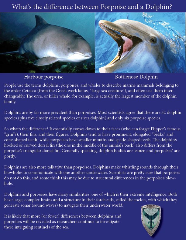compare and contrast essay on sharks and dolphins