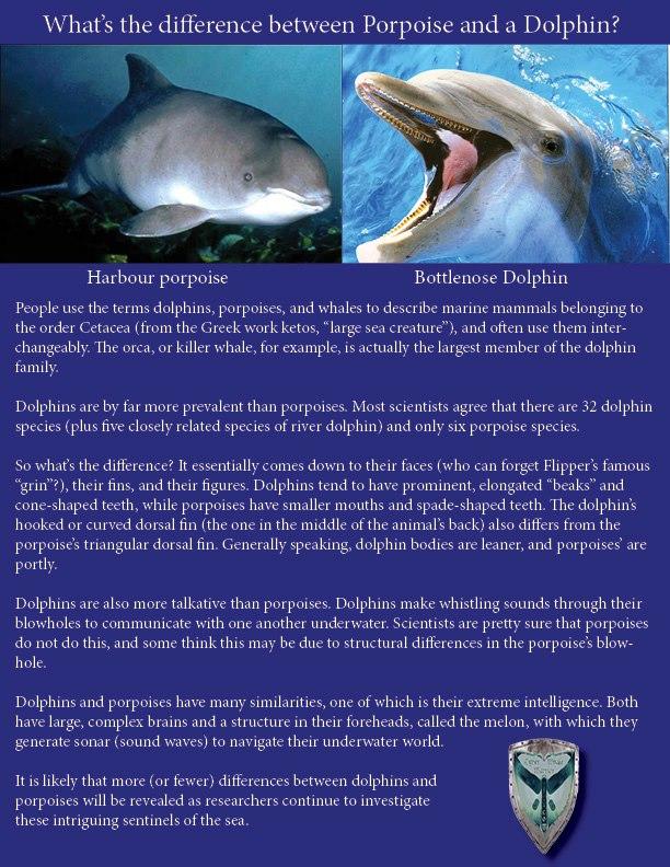 Porpoise teeth vs dolphin teeth - photo#8