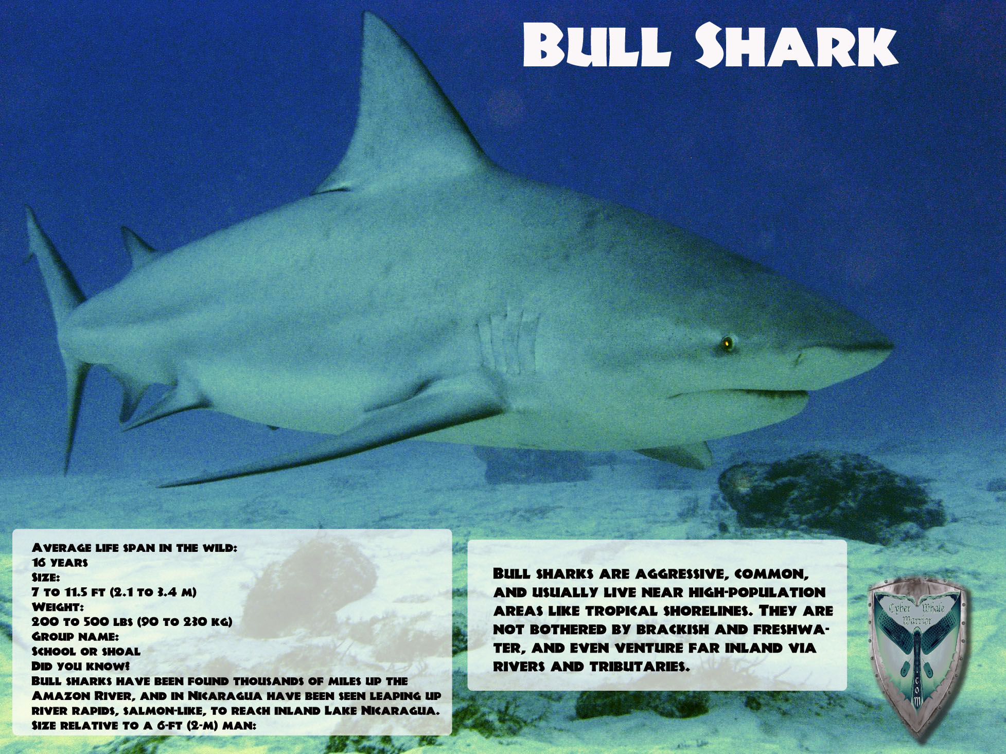 how to get bull shark testosterone